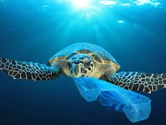Veszélyben a tenger élővilága! Mit tehetünk itt és most?