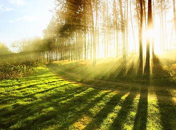 nature-1283010.jpg