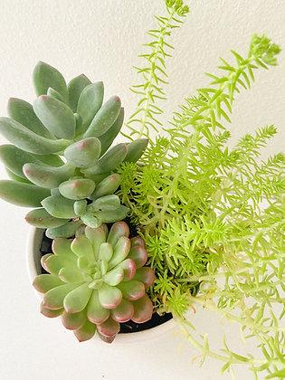 Mini Succulent Arrangement