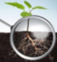 Soil Drs2.png