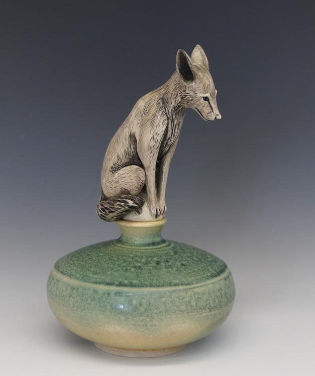 Coyote - 2016