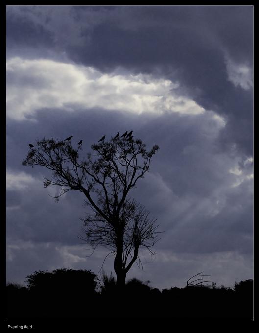 קובי בן שמעון צילום (303)
