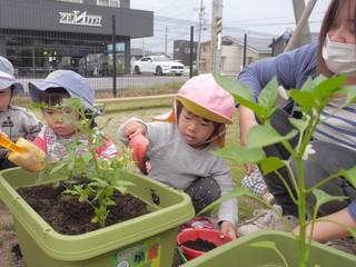 🍅野菜の苗植え オレンジ組2歳児