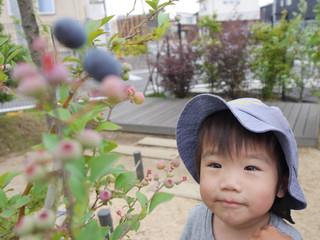待ちに待った収穫🙌 オレンジ組1歳児