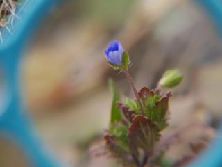 春み〜つけた🍀✨