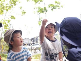 「かえる発見🐸🔍✨✨」 オレンジ組2歳児