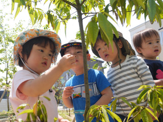 「虫探し🔍✨」 オレンジ組2歳児