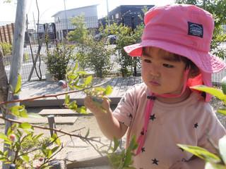ブルーベリーの収穫✨ オレンジ組1歳児