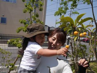 「びわの収穫✨」 オレンジ組2歳児