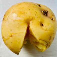 ant potato 2.jpeg