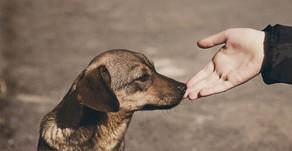 Comment approcher un chien poliment ?