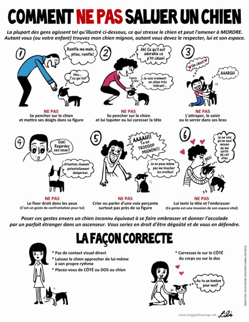saluer un chien - par dog happiness