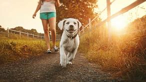 Où promener son chien à Grenoble ?