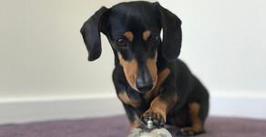 Comment garder votre chien calme lorsqu'un visiteur tape ou sonne à votre porte ?