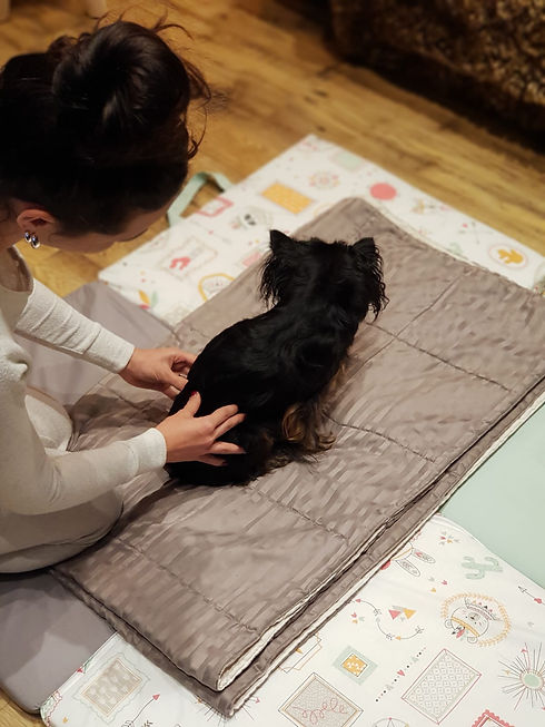 massages canins par Dog Hapiness