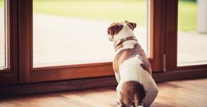 Préparez votre chien au déconfinement !