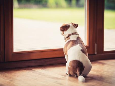 Le confinement : une aubaine pour apprendre à Médor à aimer la solitude !