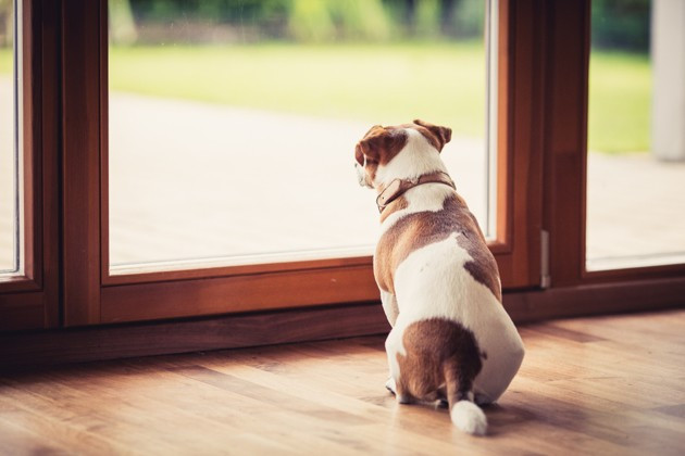Préparez votre chien au déconfinement | Dog happiness - Comportementaliste éducatrice et masseuse canin à Grenoble |