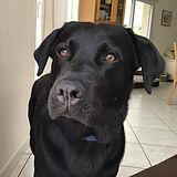 jason dog happiness dressage canin chien canine masseur masseus comportementaliste éducateur éducatrice Grenoble