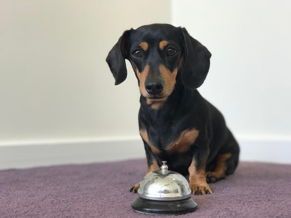 garder votre chien calme lorsque la sonnette sonne I DOG HAPPYNESS I Grenoble I Comportementaliste éducatrice et masseuse canin