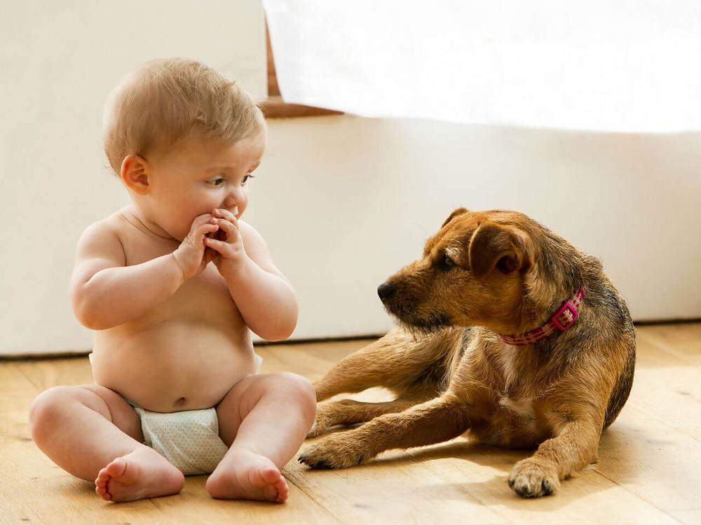 Comment préparer votre chien à l'arrivée de votre bébé ?    Dog happiness - Comportementaliste éducatrice et masseuse canin à Grenoble - Dresseur de chiens - Dressage par approche positive