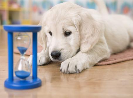Comment occuper son chien durant la période de confinement ?