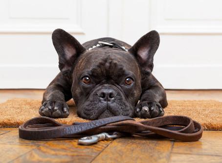 COVID-19 et confinement, ai-je le droit de sortir mon chien ?