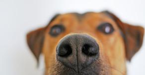 5 raisons essentielles de laisser son chien flairer les odeurs