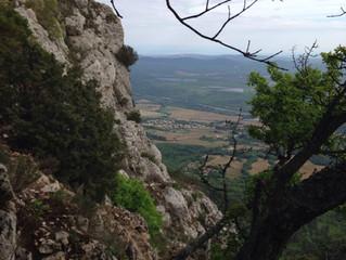 4 Sangliers SMACeurs dans le Mont Aurélien