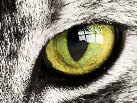 איך כלבים רואים? איך חתולים רואים? איך תוכים רואים?