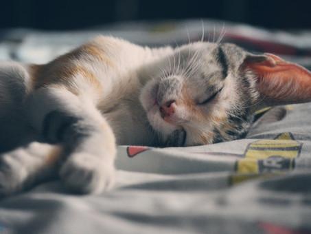 טוקסופלסמה בחתולים
