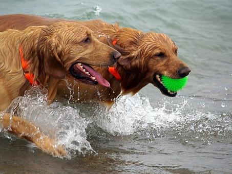 כלב שלא מסתדר עם כלבים אחרים - חשיבות סוציאליזציה (חיברות) בכלבים