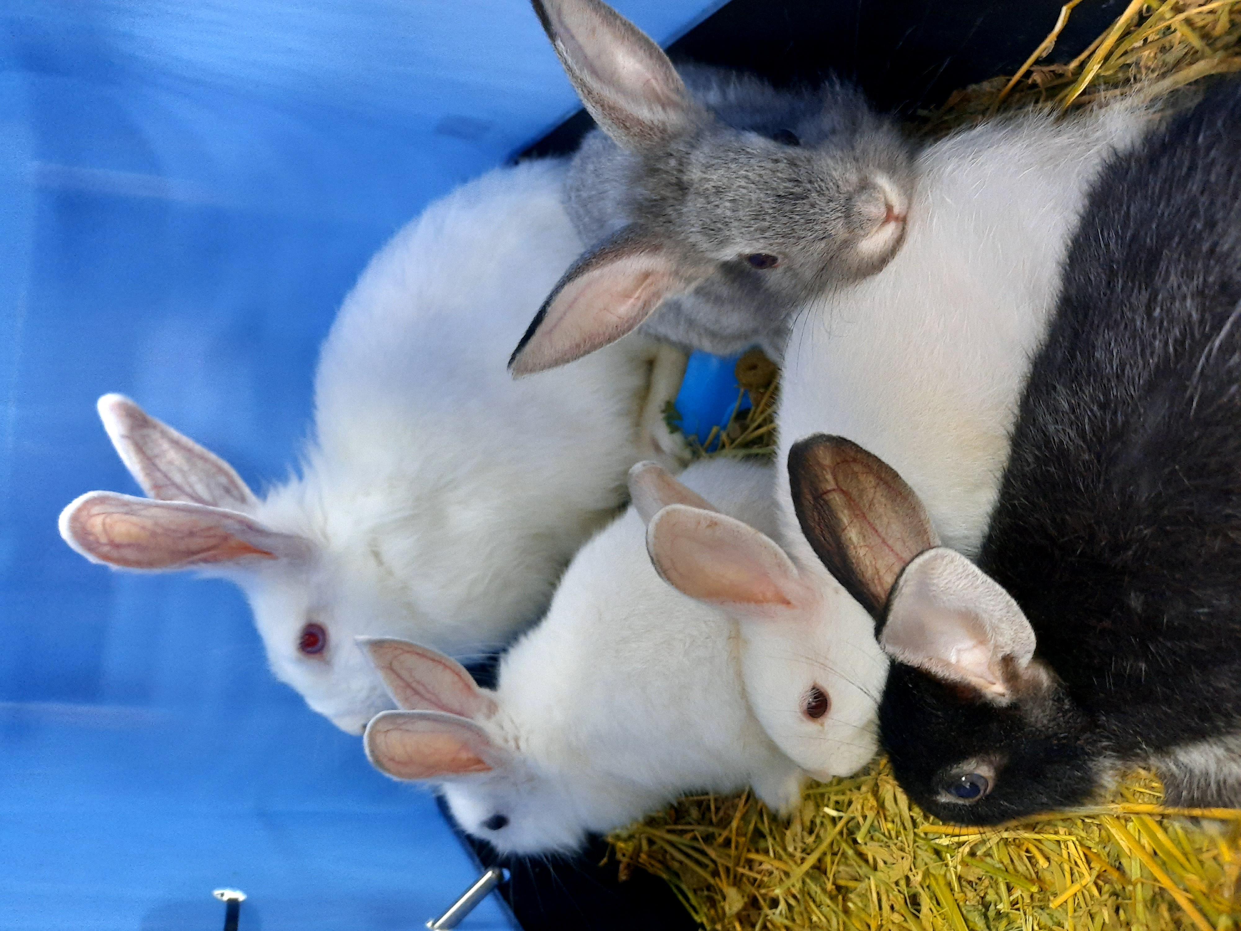 ארנבונים - אמא וגורים