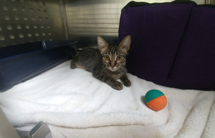 Cat hospitalization