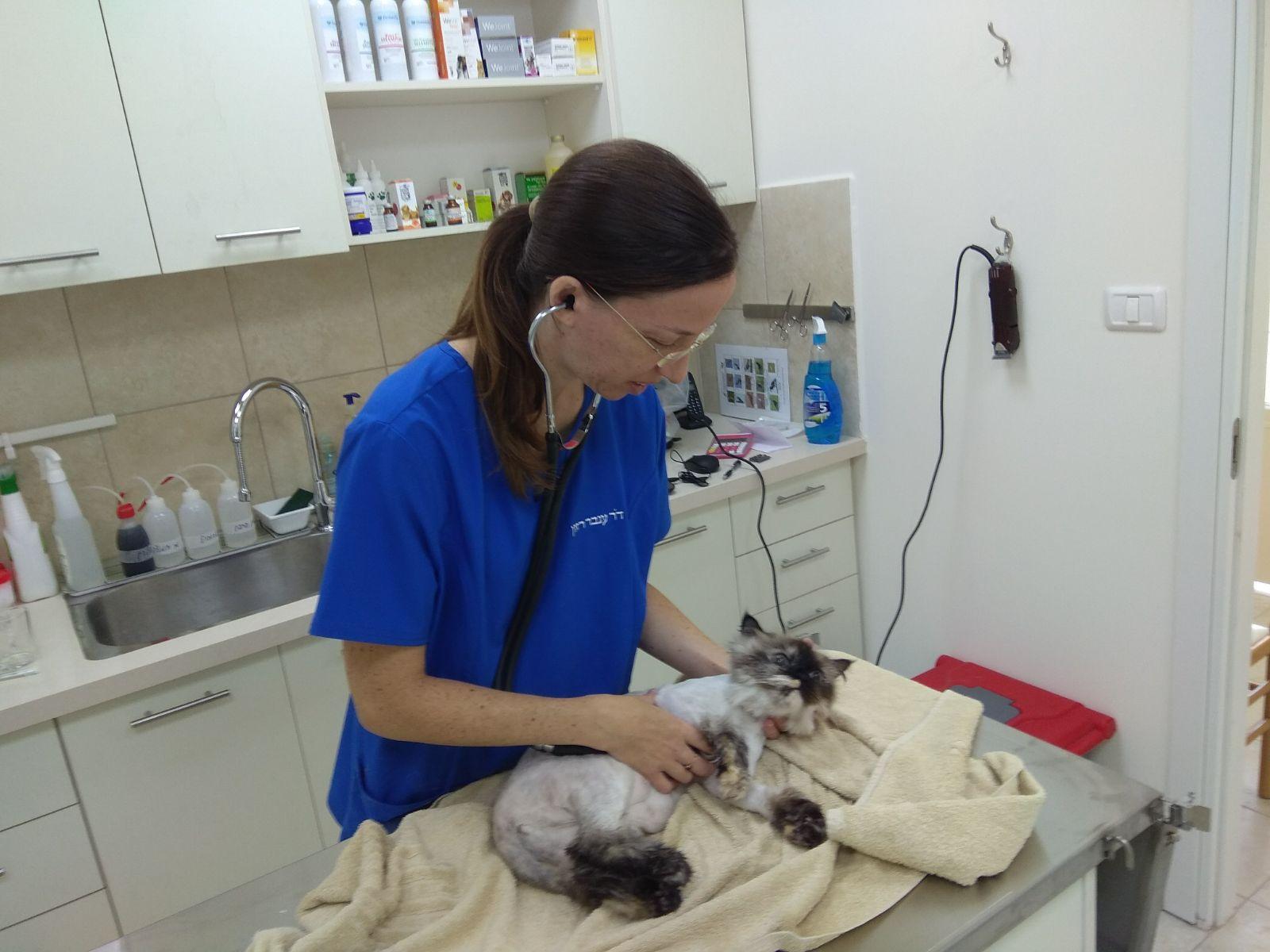 """ד""""ר ענבר רזון בבדיקת חתולה"""
