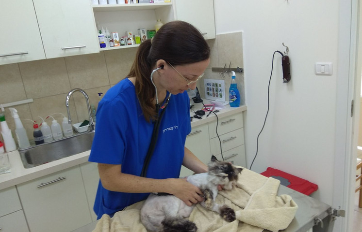 Dr. Inbar Razon and a cat