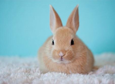 טיפול בארנב - עשרה דברים שחשוב לדעת על ארנבים