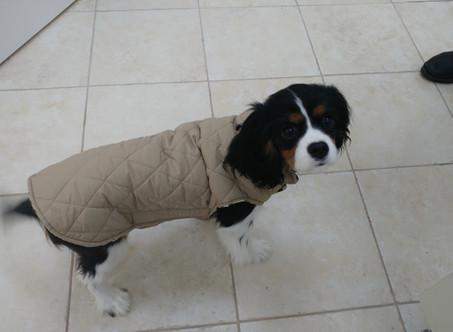 האם לכלבים , חתולים וחיות מחמד אחרות קר בחורף?