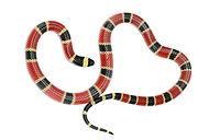 yılan ilaçlama