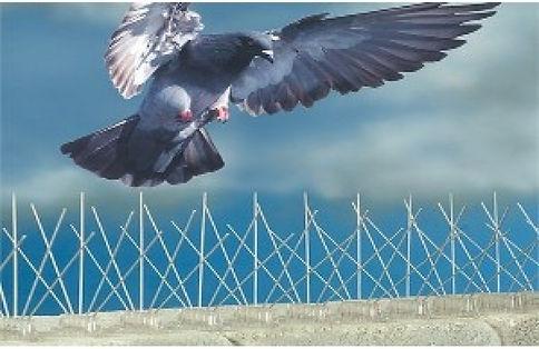 kuş kaçırıcı
