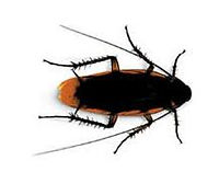 hamamböceği ilaçlaması