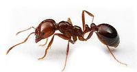 karınca ilaçlama izmir