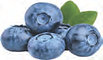 blue berry.png
