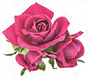 red rose 1.png