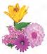 loliac lilies 1.png
