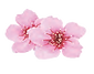 blossom_edited.png