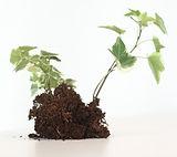 Growing%20Plant%20_edited.jpg