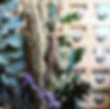 LTAE FLEURS SECHEES.jpg