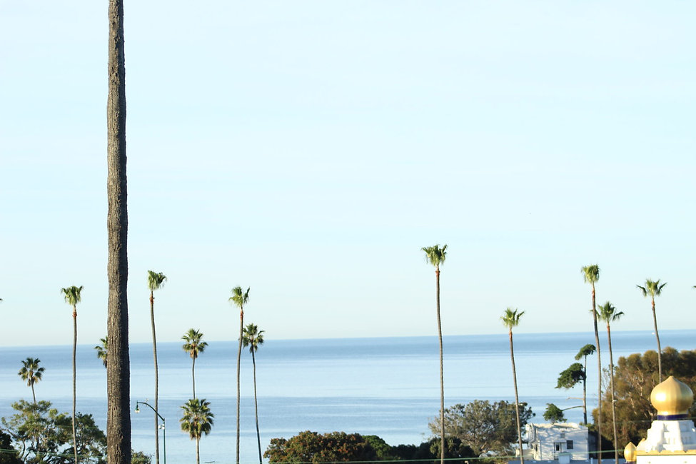 Palm-Trees-Encinitas-Swamis-Mike-Olivia-