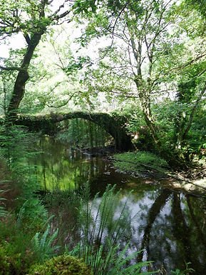 Celtic Rainforest Drovers Bridge.jpg
